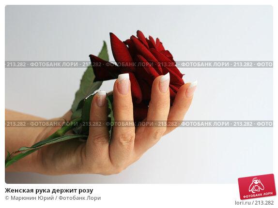 Женская рука держит розу, фото № 213282, снято 9 февраля 2008 г. (c) Марюнин Юрий / Фотобанк Лори