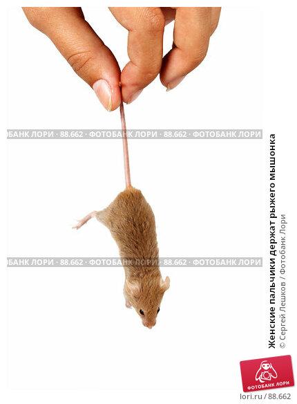 Женские пальчики держат рыжего мышонка, фото № 88662, снято 23 сентября 2007 г. (c) Сергей Лешков / Фотобанк Лори