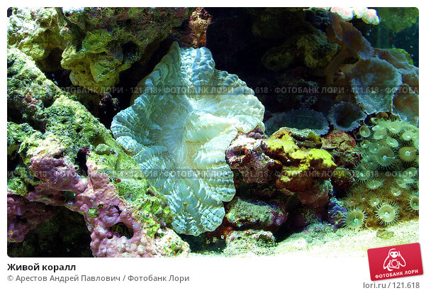 Живой коралл, фото № 121618, снято 12 ноября 2006 г. (c) Арестов Андрей Павлович / Фотобанк Лори