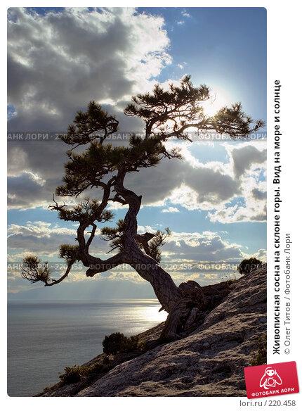 Купить «Живописная сосна на склоне горы. Вид на море и солнце», фото № 220458, снято 22 апреля 2018 г. (c) Олег Титов / Фотобанк Лори