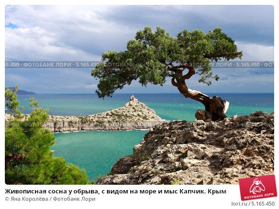 Купить «Живописная сосна у обрыва, с видом на море и мыс Капчик. Крым», эксклюзивное фото № 5165450, снято 24 сентября 2013 г. (c) Яна Королёва / Фотобанк Лори