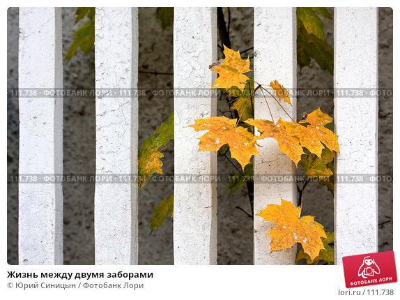 Жизнь между двумя заборами, фото № 111738, снято 22 октября 2007 г. (c) Юрий Синицын / Фотобанк Лори