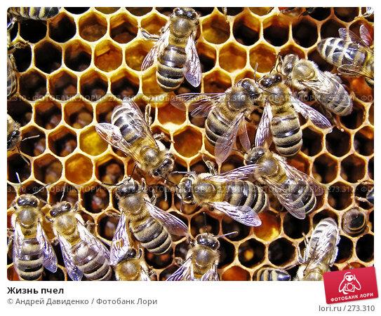 Жизнь пчел, фото № 273310, снято 19 апреля 2008 г. (c) Андрей Давиденко / Фотобанк Лори