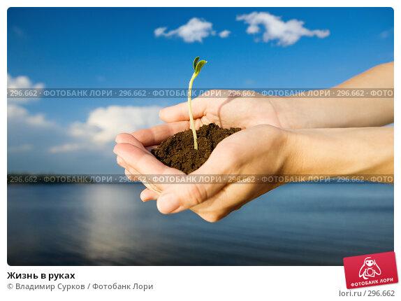 Купить «Жизнь в руках», фото № 296662, снято 17 мая 2008 г. (c) Владимир Сурков / Фотобанк Лори