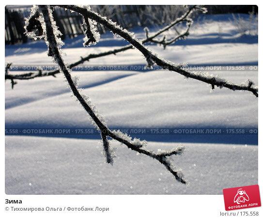 Зима, фото № 175558, снято 5 января 2006 г. (c) Тихомирова Ольга / Фотобанк Лори