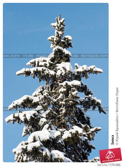 Купить «Зима», фото № 179086, снято 18 ноября 2007 г. (c) Юрий Брыкайло / Фотобанк Лори