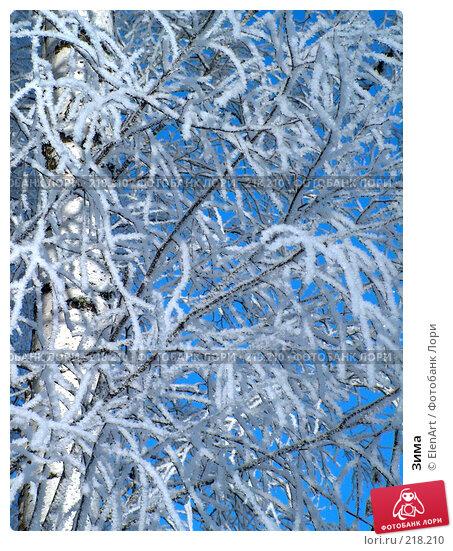 Зима, фото № 218210, снято 30 марта 2017 г. (c) ElenArt / Фотобанк Лори