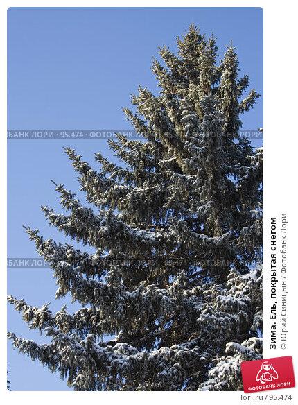 Зима. Ель, покрытая снегом, фото № 95474, снято 26 января 2007 г. (c) Юрий Синицын / Фотобанк Лори