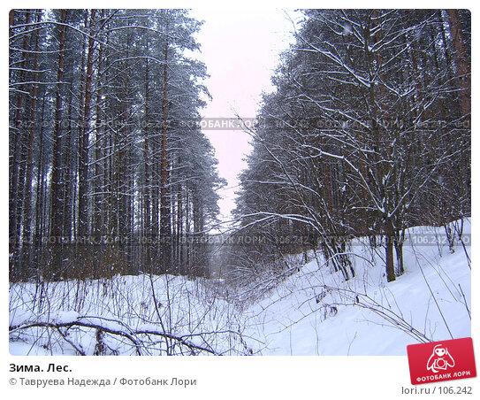 Зима. Лес., фото № 106242, снято 7 марта 2005 г. (c) Тавруева Надежда / Фотобанк Лори