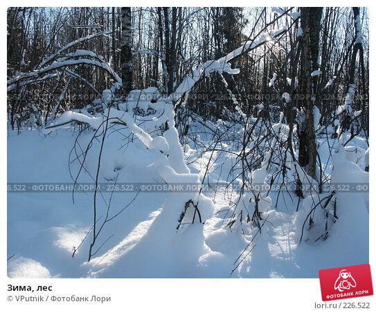 Зима, лес, фото № 226522, снято 12 февраля 2007 г. (c) VPutnik / Фотобанк Лори