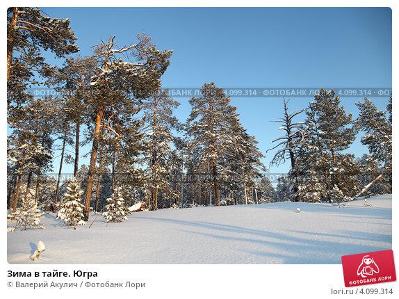 Купить «Зима в тайге. Югра», эксклюзивное фото № 4099314, снято 9 декабря 2012 г. (c) Валерий Акулич / Фотобанк Лори