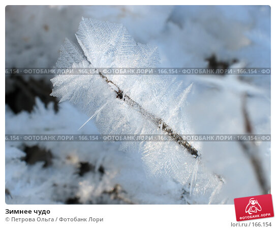 Зимнее чудо, фото № 166154, снято 2 января 2008 г. (c) Петрова Ольга / Фотобанк Лори