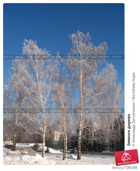 Зимнее дерево, фото № 138930, снято 28 ноября 2007 г. (c) Александр Литовченко / Фотобанк Лори