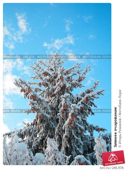 Зимнее очарование, фото № 245974, снято 9 декабря 2007 г. (c) Игорь Романов / Фотобанк Лори