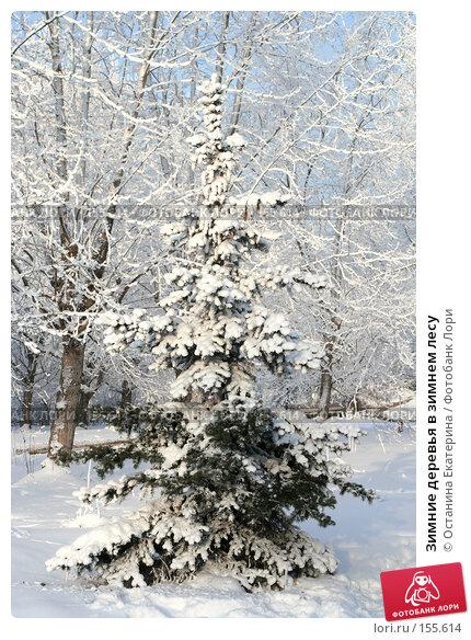 Зимние деревья в зимнем лесу, фото № 155614, снято 13 декабря 2007 г. (c) Останина Екатерина / Фотобанк Лори