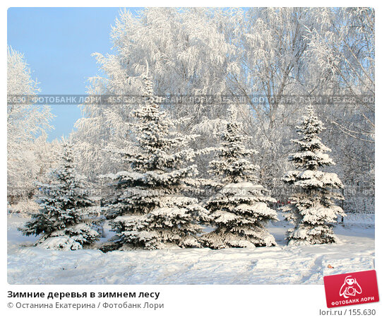 Зимние деревья в зимнем лесу, фото № 155630, снято 13 декабря 2007 г. (c) Останина Екатерина / Фотобанк Лори