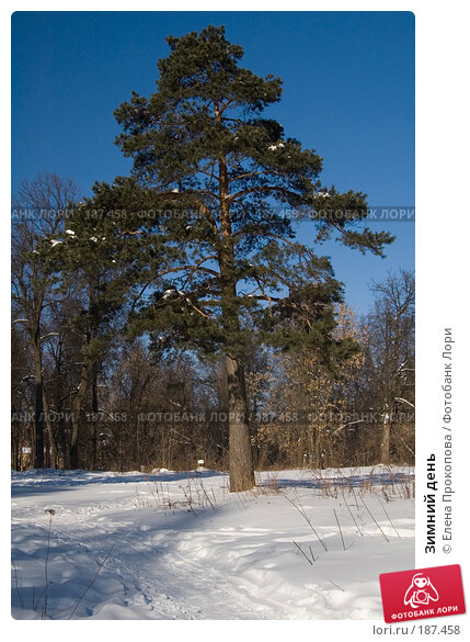 Купить «Зимний день», фото № 187458, снято 20 апреля 2005 г. (c) Елена Прокопова / Фотобанк Лори