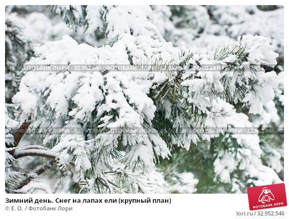Зимний день. Снег на лапах ели (крупный план) Стоковое фото, фотограф E. O. / Фотобанк Лори