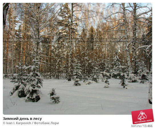 Зимний день в лесу, фото № 13466, снято 5 февраля 2006 г. (c) Ivan I. Karpovich / Фотобанк Лори