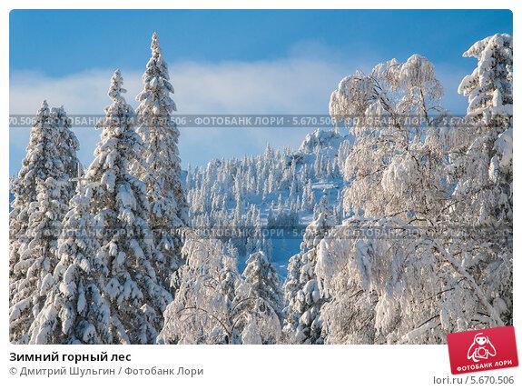 Купить «Зимний горный лес», фото № 5670506, снято 20 января 2014 г. (c) Дмитрий Шульгин / Фотобанк Лори