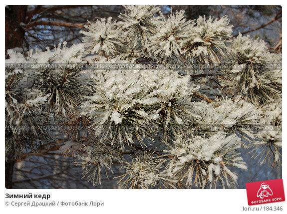 Зимний кедр, фото № 184346, снято 8 декабря 2007 г. (c) Сергей Драцкий / Фотобанк Лори
