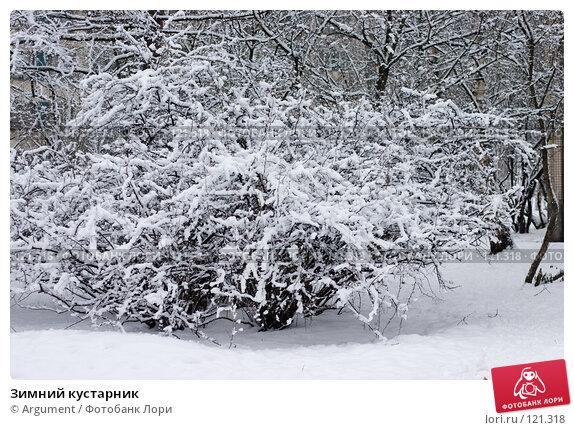 Купить «Зимний кустарник», фото № 121318, снято 3 января 2006 г. (c) Argument / Фотобанк Лори