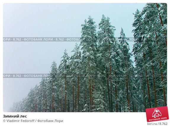 Купить «Зимний лес », фото № 8762, снято 21 ноября 2017 г. (c) Vladimir Fedoroff / Фотобанк Лори