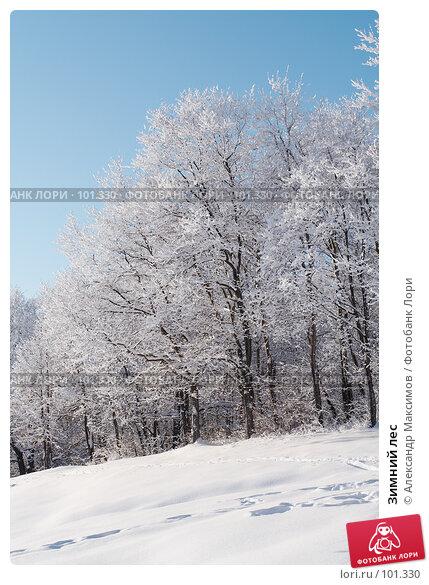 Зимний лес, фото № 101330, снято 31 декабря 2005 г. (c) Александр Максимов / Фотобанк Лори
