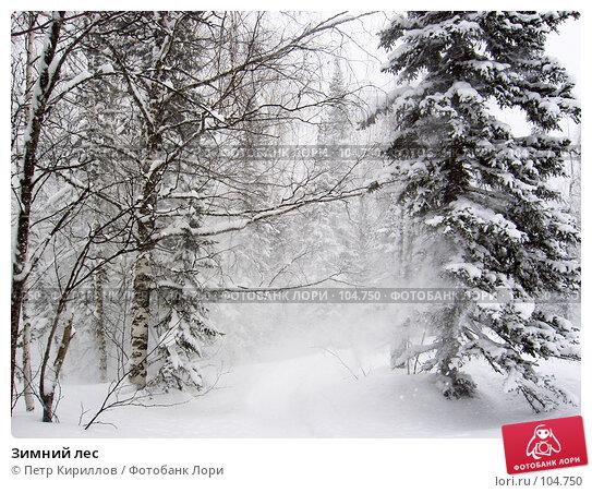 Зимний лес, фото № 104750, снято 27 мая 2017 г. (c) Петр Кириллов / Фотобанк Лори