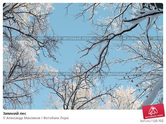 Зимний лес, фото № 120102, снято 31 декабря 2005 г. (c) Александр Максимов / Фотобанк Лори