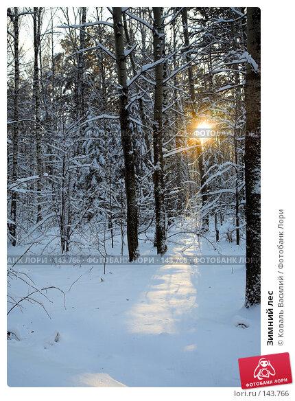 Зимний лес, фото № 143766, снято 10 ноября 2007 г. (c) Коваль Василий / Фотобанк Лори