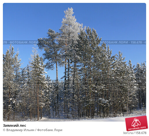 Зимний лес, фото № 158678, снято 23 декабря 2007 г. (c) Владимир Ильин / Фотобанк Лори
