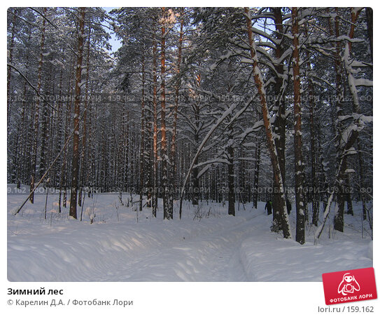 Зимний лес, фото № 159162, снято 13 февраля 2006 г. (c) Карелин Д.А. / Фотобанк Лори