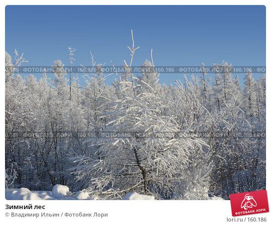 Зимний лес, фото № 160186, снято 24 декабря 2007 г. (c) Владимир Ильин / Фотобанк Лори