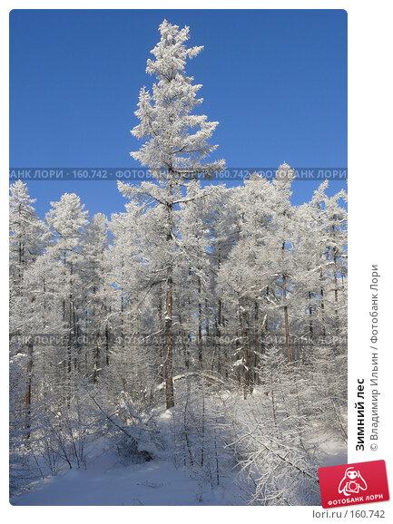 Купить «Зимний лес», фото № 160742, снято 24 декабря 2007 г. (c) Владимир Ильин / Фотобанк Лори