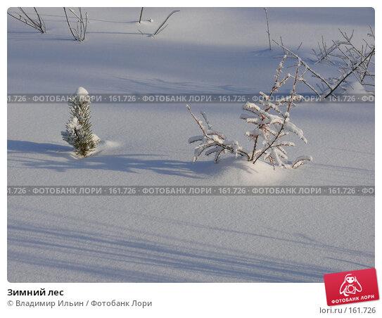 Зимний лес, фото № 161726, снято 24 декабря 2007 г. (c) Владимир Ильин / Фотобанк Лори