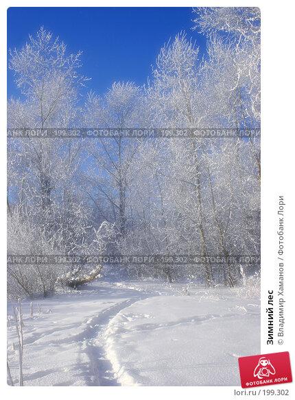 Зимний лес, фото № 199302, снято 31 января 2005 г. (c) Владимир Хаманов / Фотобанк Лори