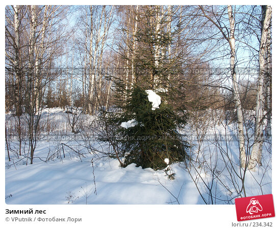 Зимний лес, фото № 234342, снято 25 февраля 2007 г. (c) VPutnik / Фотобанк Лори