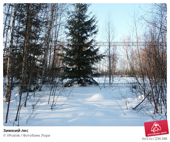 Зимний лес, фото № 234346, снято 25 февраля 2007 г. (c) VPutnik / Фотобанк Лори