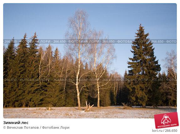 Зимний лес, фото № 266650, снято 1 января 2008 г. (c) Вячеслав Потапов / Фотобанк Лори