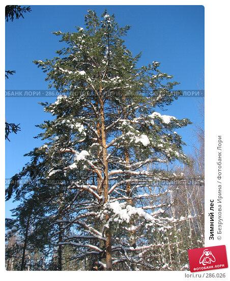Зимний лес, фото № 286026, снято 25 февраля 2007 г. (c) Безрукова Ирина / Фотобанк Лори