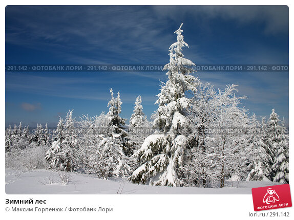 Купить «Зимний лес», фото № 291142, снято 7 марта 2006 г. (c) Максим Горпенюк / Фотобанк Лори
