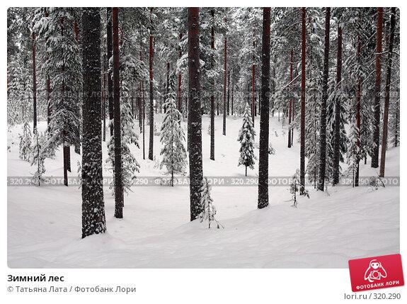Купить «Зимний лес», фото № 320290, снято 30 декабря 2005 г. (c) Татьяна Лата / Фотобанк Лори