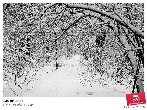 Зимний лес, фото № 325758, снято 30 марта 2017 г. (c) Михаил / Фотобанк Лори