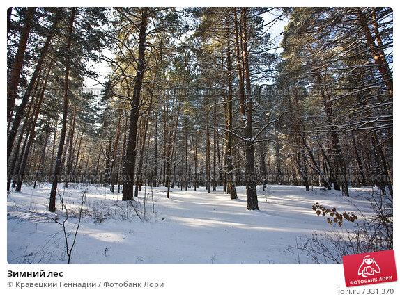 Купить «Зимний лес», фото № 331370, снято 20 января 2006 г. (c) Кравецкий Геннадий / Фотобанк Лори