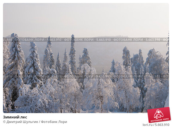 Купить «Зимний лес», фото № 5663910, снято 20 января 2014 г. (c) Дмитрий Шульгин / Фотобанк Лори