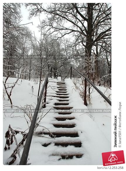 Купить «Зимний пейзаж», эксклюзивное фото № 2253258, снято 27 декабря 2010 г. (c) lana1501 / Фотобанк Лори