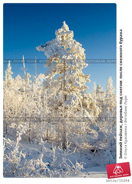 Зимний пейзаж, деревья под снегом  после снежного бурана, фото № 13014, снято 5 ноября 2006 г. (c) Ольга Красавина / Фотобанк Лори