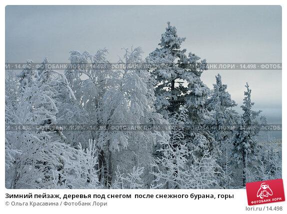 Купить «Зимний пейзаж, деревья под снегом  после снежного бурана, горы», фото № 14498, снято 3 ноября 2006 г. (c) Ольга Красавина / Фотобанк Лори