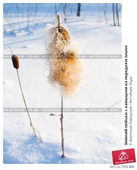 Зимний пейзаж с камышом на переднем плане, фото № 316466, снято 5 февраля 2005 г. (c) Анатолий Заводсков / Фотобанк Лори